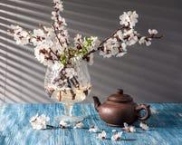 Todavía vida con el flor del albaricoque Fotografía de archivo