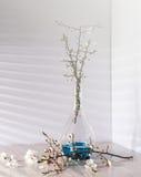 Todavía vida con el flor del albaricoque Imágenes de archivo libres de regalías