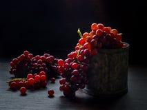 Todavía vida con el grupo de uvas frescas Fotos de archivo