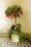 Todavía vida con el pote de arcilla con las flores Imágenes de archivo libres de regalías