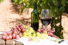 Todavía vida con el vidrio de vino rojo y de uvas Foto de archivo libre de regalías