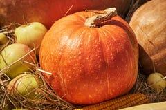 Todavía vida con la calabaza, las manzanas y el maíz imagen de archivo libre de regalías