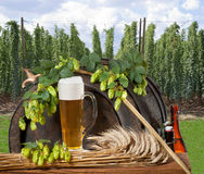Todavía vida con la cerveza Imágenes de archivo libres de regalías