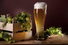 Todavía vida con la cerveza y los saltos Imagen de archivo