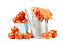 Todavía vida con la cosecha grande de los tomates frescos aislados en blanco Imagen de archivo