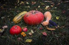 Todavía vida con la cosecha Halloween del otoño de las calabazas en hierba del tha Imagenes de archivo