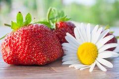 Todavía vida con la fresa y una manzanilla Foto de archivo libre de regalías