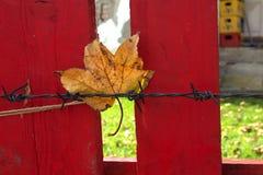 Todavía vida con la hoja y la cerca roja Foto de archivo