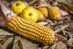 Todavía vida con la mazorca de maíz y las manzanas Fotos de archivo