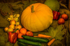 Todavía vida con la nueva cosecha de las verduras Imagen de archivo