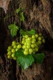 Todavía vida con la uva verde Imagen de archivo libre de regalías
