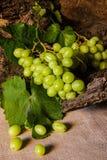 Todavía vida con la uva verde Imágenes de archivo libres de regalías
