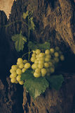 Todavía vida con la uva verde Fotos de archivo