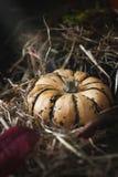 Todavía vida con las calabazas en un heno con las hojas de otoño Fotografía de archivo