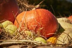 Todavía vida con las calabazas, las manzanas y el maíz imagen de archivo libre de regalías