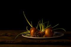 Todavía vida con las cebollas que dan lanzamientos Foto de archivo