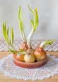 Todavía vida con las cebollas verdes Fotografía de archivo
