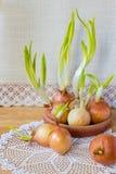 Todavía vida con las cebollas verdes Imagen de archivo