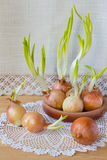Todavía vida con las cebollas verdes Imagen de archivo libre de regalías