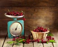 Todavía vida con las cerezas frescas Foto de archivo libre de regalías