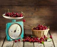 Todavía vida con las cerezas frescas Imagenes de archivo