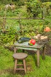 Todavía vida con las diversas verduras al aire libre en el sol Foto de archivo libre de regalías
