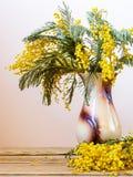 Todavía vida con las flores amarillas de la primavera Dealbata del acacia conocido como el zarzo de plata, el zarzo azul y mimosa Imagen de archivo