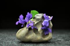 Todavía vida con las flores de la viola de la primavera Imágenes de archivo libres de regalías