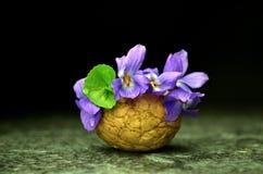 Todavía vida con las flores de la viola de la primavera Imagen de archivo