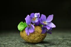 Todavía vida con las flores de la viola de la primavera Imagenes de archivo