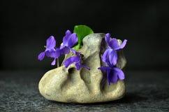 Todavía vida con las flores de la viola de la primavera Fotografía de archivo libre de regalías