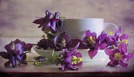 Todavía vida con las flores del aquilegia y de la taza Foto de archivo