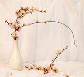 Todavía vida con las flores del cerezo Imágenes de archivo libres de regalías