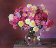 Todavía vida con las flores del otoño crisantemos Imágenes de archivo libres de regalías