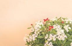 Todavía vida con las flores en fondo de la pared Imagen de archivo libre de regalías