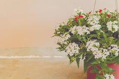 Todavía vida con las flores en fondo de la pared Fotografía de archivo