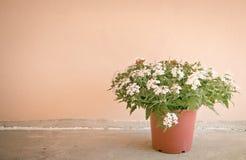 Todavía vida con las flores en fondo de la pared Imagen de archivo