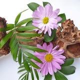 Todavía vida con las flores, las hojas y la rama decorativas Fotografía de archivo
