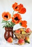 Todavía vida con las flores rojas de la amapola oriental y las manzanas frescas Imágenes de archivo libres de regalías