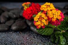 Todavía vida con las flores y las piedras negras Fotos de archivo
