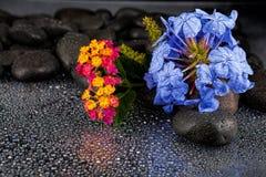 Todavía vida con las flores y las piedras negras Fotografía de archivo