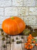 Todavía vida con las frutas de la acción de gracias de la caída del otoño Fotografía de archivo libre de regalías
