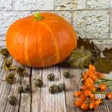 Todavía vida con las frutas de la acción de gracias de la caída del otoño Imagenes de archivo