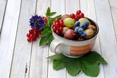 Todavía vida con las frutas frescas fotografía de archivo libre de regalías