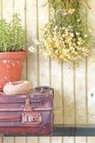 Todavía vida con las hierbas y las flores fotos de archivo libres de regalías