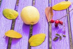 Todavía vida con las hojas amarillas de la manzana y de otoño Fotografía de archivo libre de regalías