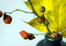 Todavía vida con las hojas de otoño, los escaramujos y una botella Foto de archivo