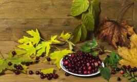 Todavía vida con las hojas y los arándanos de otoño en un platillo blanco Fotos de archivo