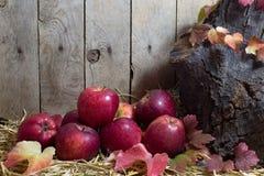 Todavía vida con las manzanas y Autumn Leaves rojos en un heno, fondo de madera de los tablones Imagenes de archivo