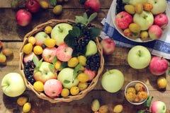 Todavía vida con las manzanas y los ciruelos, visión superior Imagen de archivo